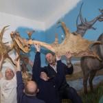 Conservation of The Giant Deer Skeleton